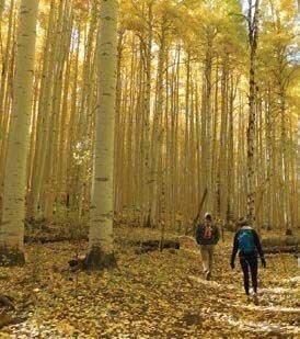 Sunset Roadless Area Colorado aspen grove
