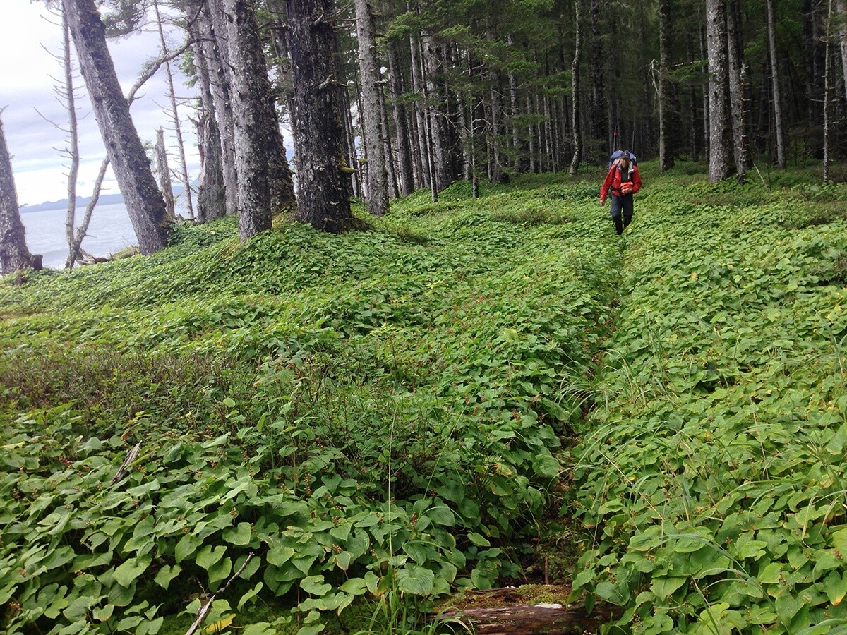 Hiking wild trails © Brad Meiklejohn