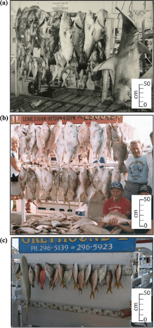 Trophy fish over time
