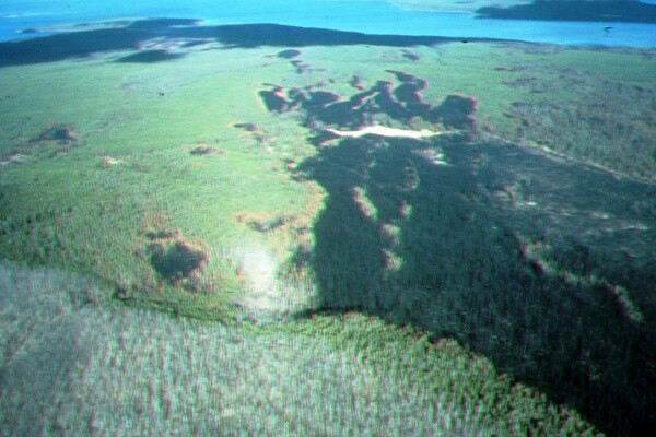 Air view of how winds drove Y'stone fires and spotting. Yellowstone Lk. in background. (c) George Wuerthner