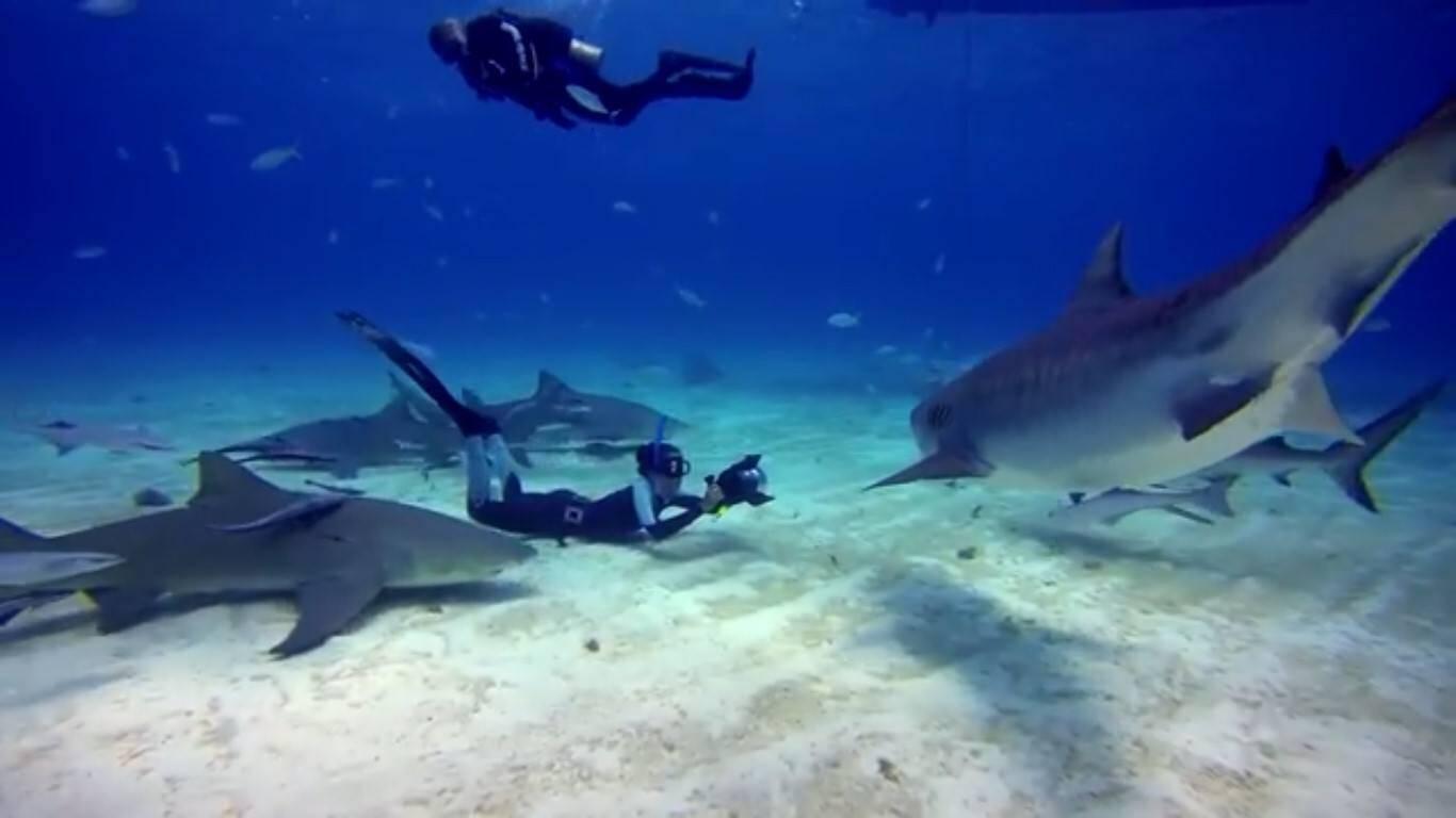 Shark Girl Madi Stewart in her element. — ©Bluethefilm.org