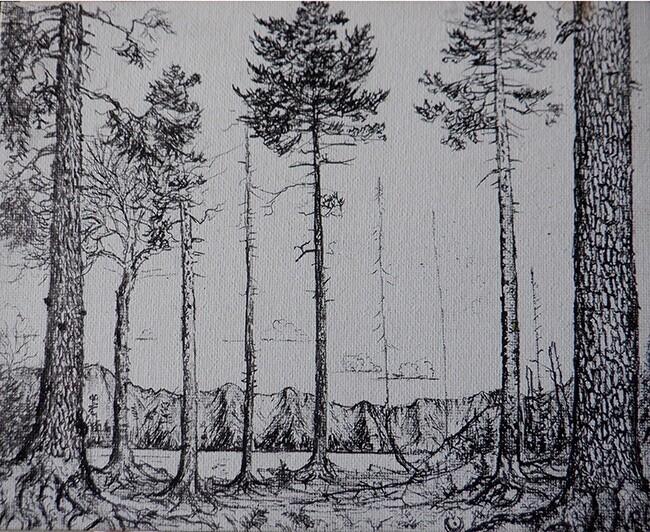Moose pond cedars and a pine hemlock scene