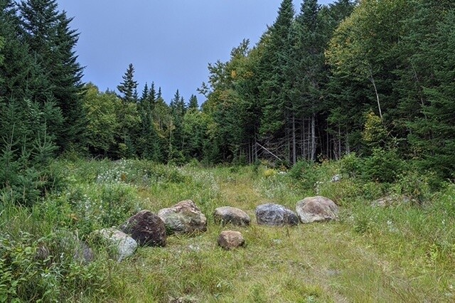 Lone Mountain Wilderness Sanctuary in Maine, letting an old logging road rewild. (c) NWT