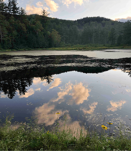 pond beyond the boardwalk (c) Bob Leverett