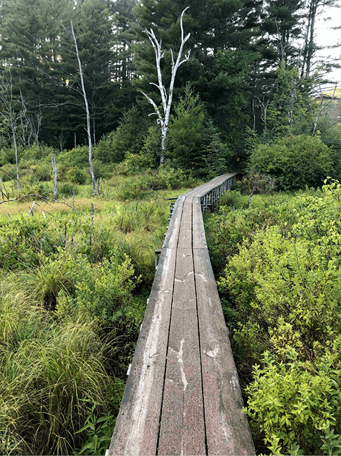 boardwalk and surrounding vegetation