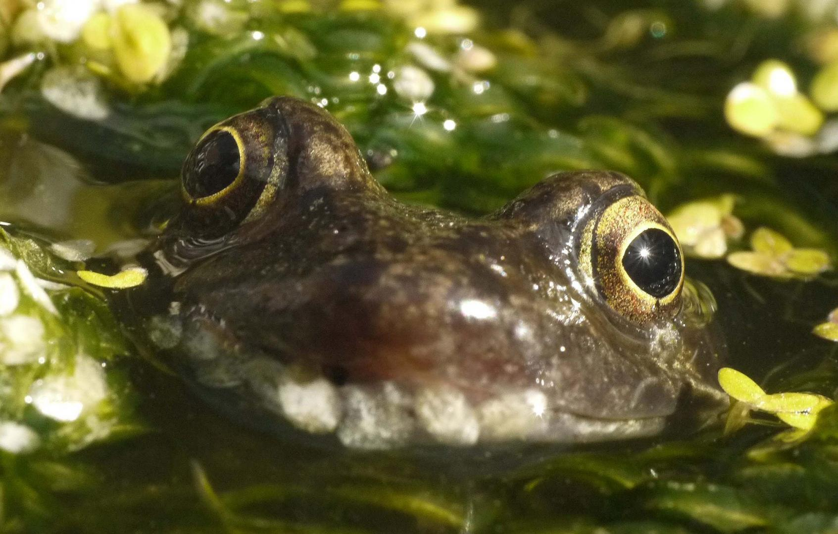 Garden Photo - frog