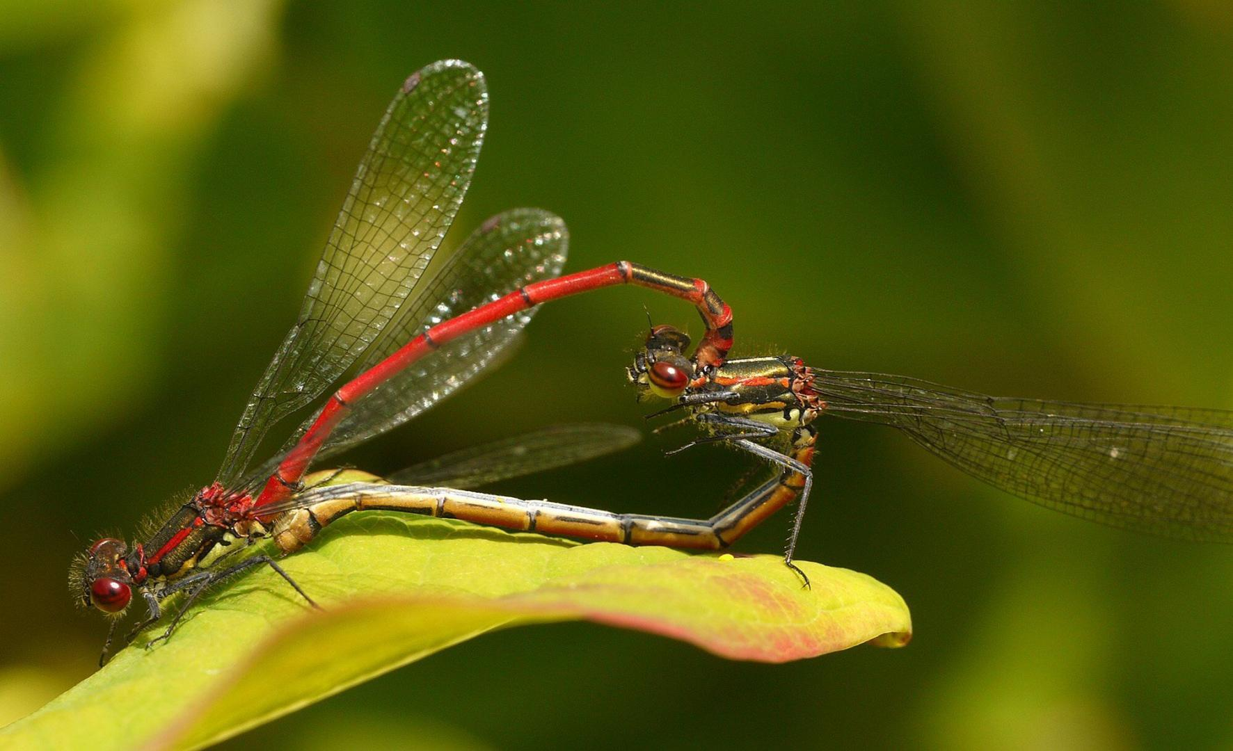 Garden Photo - dragonfly