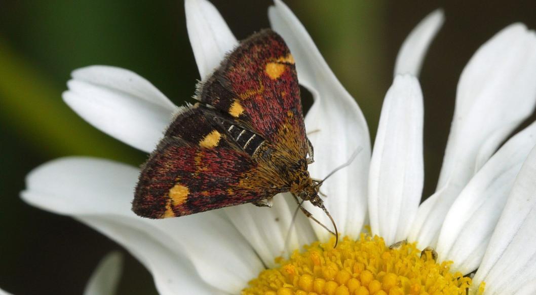 Garden Photo - butterfly