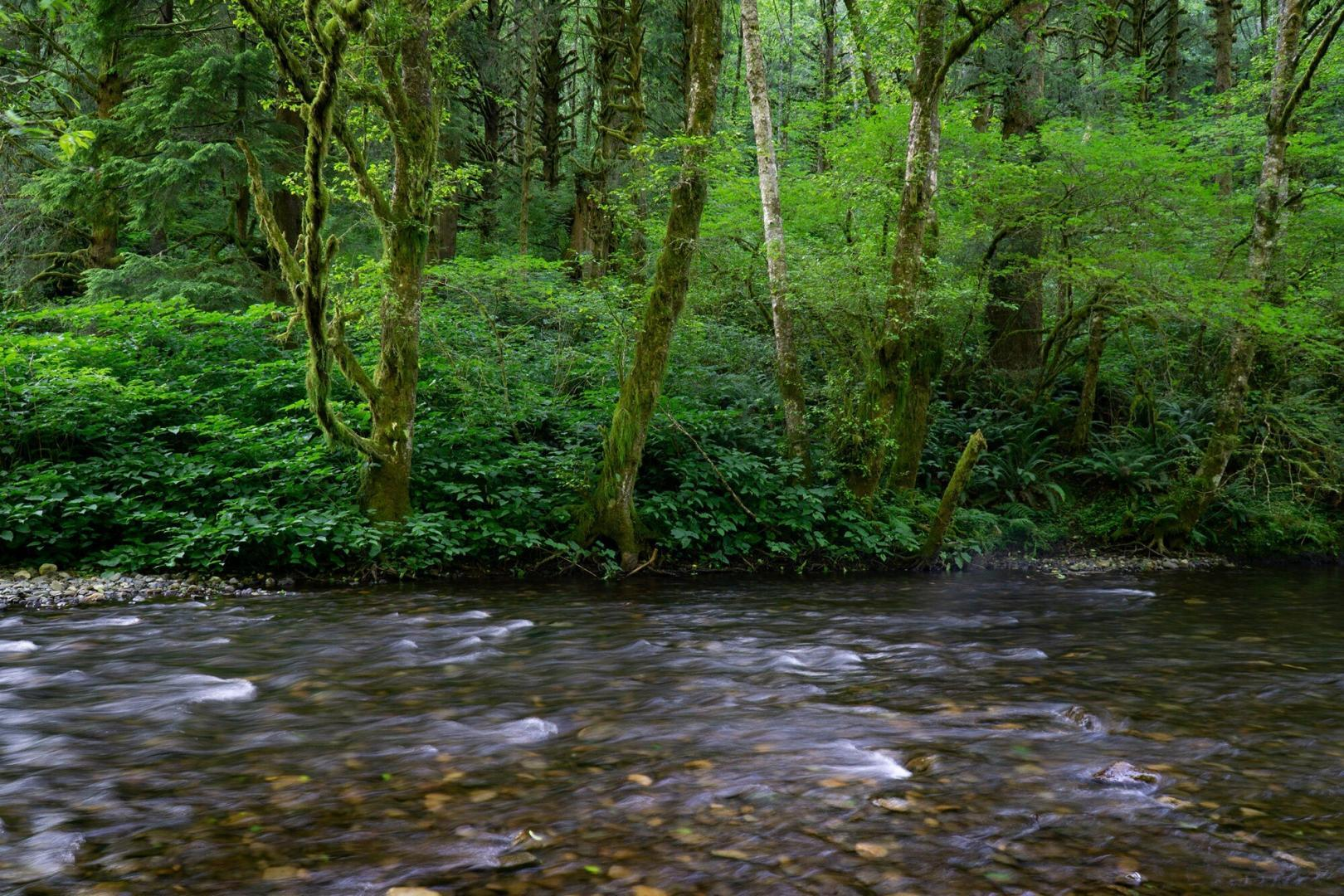 The proposed North Fork Wilson Wild and Scenic River. Source: Daniel Howland.