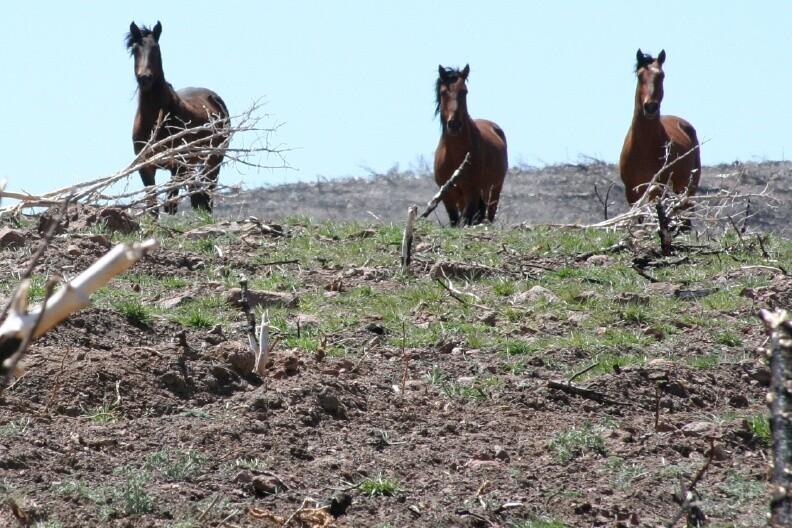 Wild Horses, UT West Desert (c) Kim Crumbo