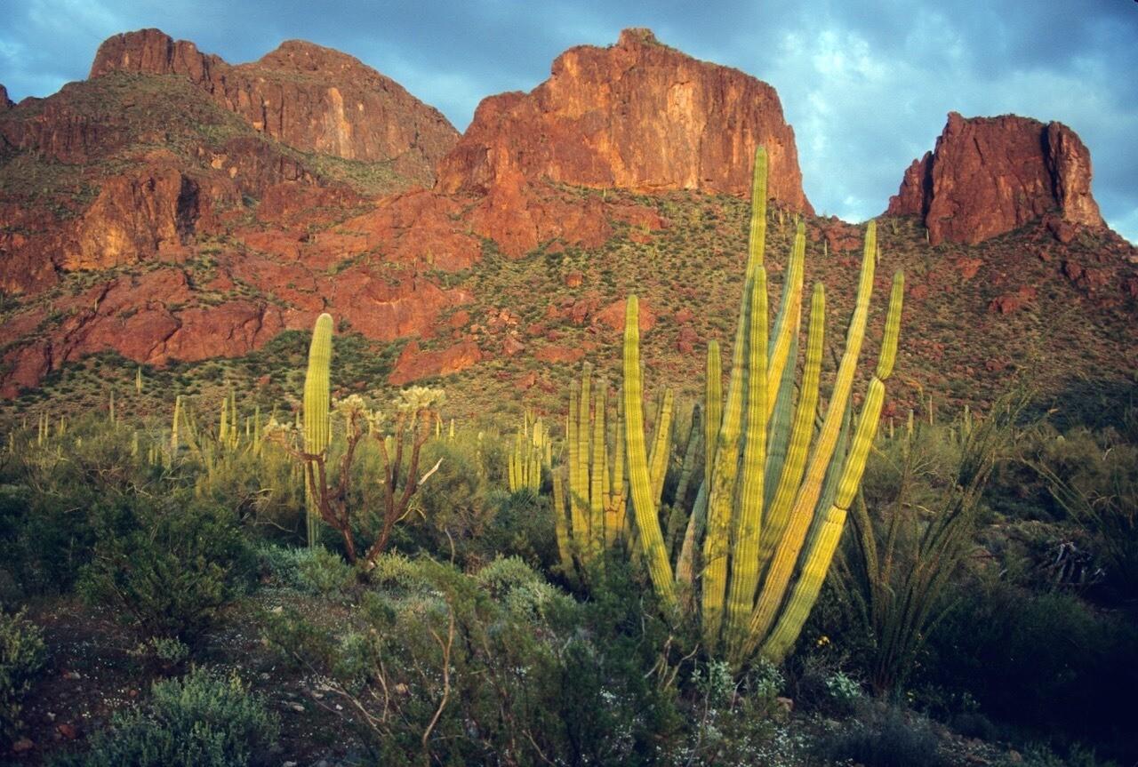 Organ Pipe Cactus National Monument Wilderness-Arizona
