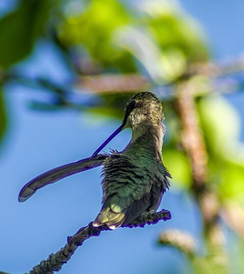 Hummingbird Yoga #1