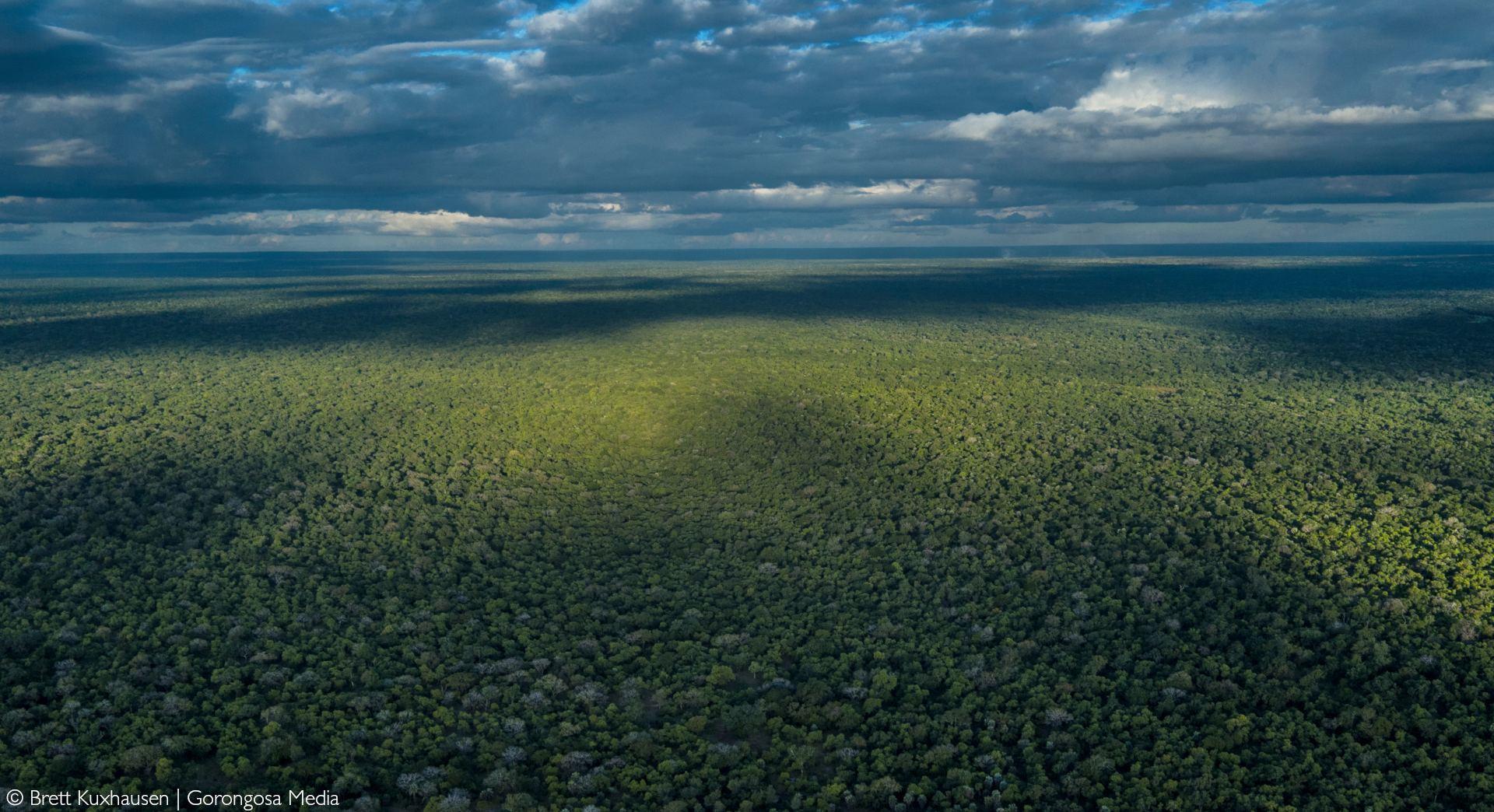 Carpet of Trees