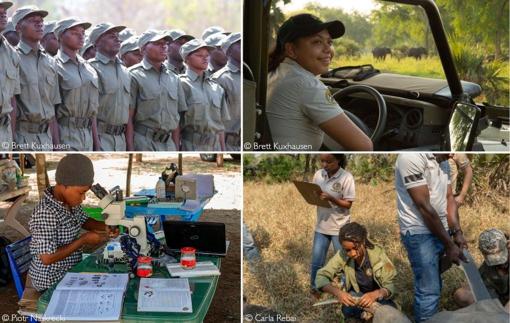 Clockwise from top left: A group of rangers on parade; Carol Wilson, activities coordinator at Gorongosa; Dominique Gonçalves at an elephant collaring exercise; a student researcher