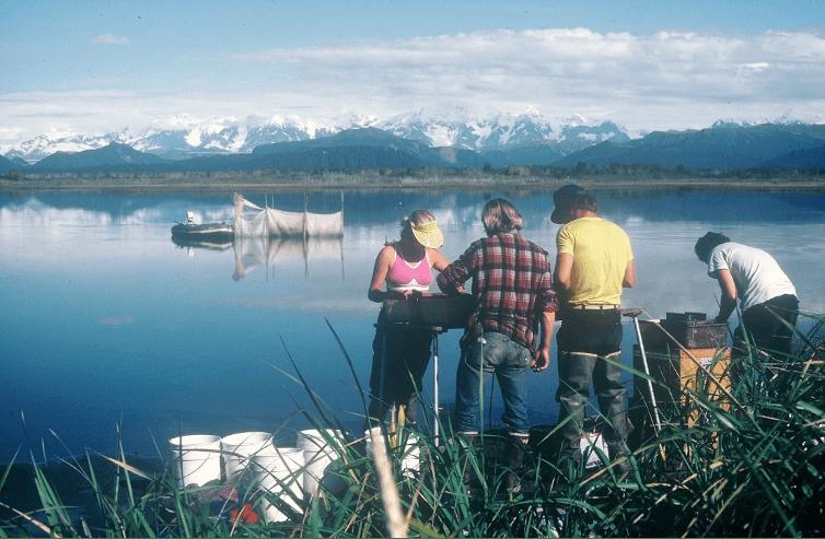 tagging salmon