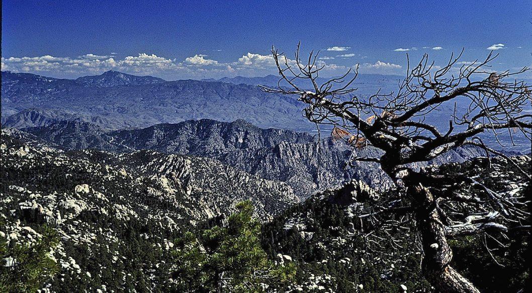 Pusch Ridge Wilderness Area, Catalina Mts, Arizona (c) Dave Foreman