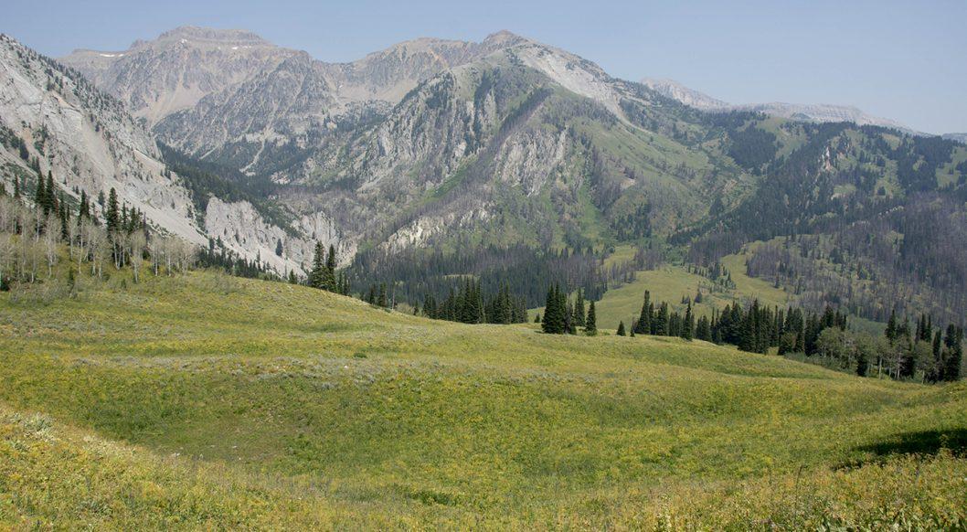 Shoal Creek Gros Ventre Wilderness, Wyoming