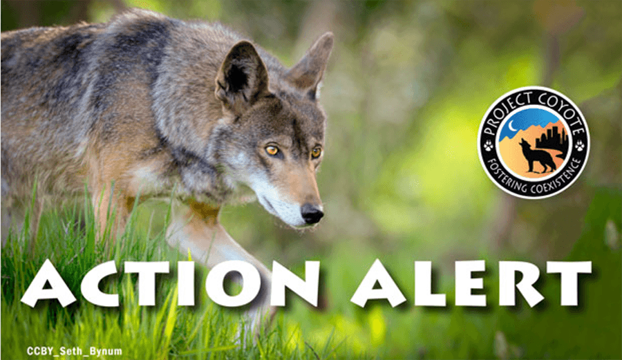 Project Coyote Action Alert