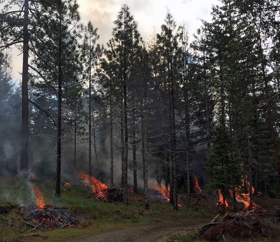 The Forest Service is now calling pile burning 'prescribed fire,' but this concentrated burning can sterilize the soil. (Source: USFS)