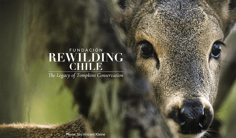Huemul with Rewilding Chile logo