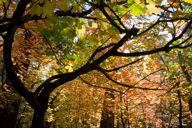 Fall Colors in the East Clear Creek Watershed (c) Zachary Crumbo