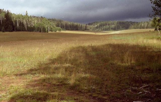 North Kaibab meadow (c) Kim Crumbo