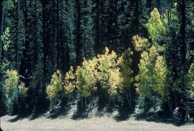 North Kaibab mixed conifer (c) Kim Crumbo