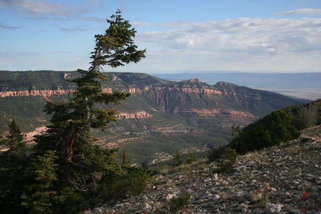 North Kaibab view (c) Kim Crumbo