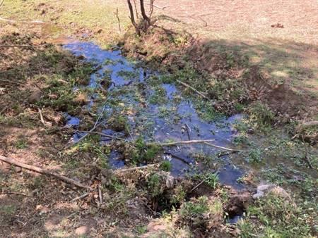 Streambank degradation, loss of streamside vegetation by cattle grazing along Bonita Creek, in the Gila Box National Conservation Area, 33.040201, -109.561389, June 1, 2021.